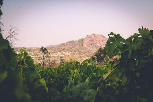 Imagen de viñedo con la Peña de fondo