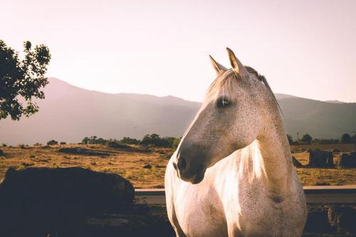 Imagen retrato de caballo