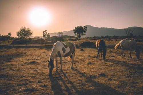 Imagen de caballos pastando y de la Peña Muñana