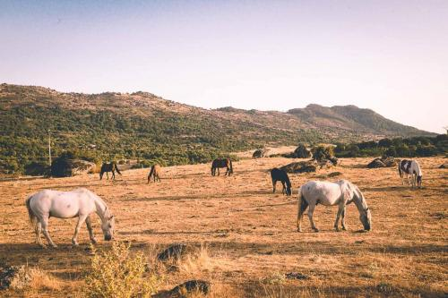 Imagenes de caballos pastando
